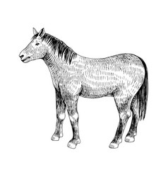 hand drawn horse farm animal vector image