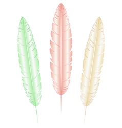 light feathers on white vector image