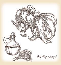 Plant ylang-ylang cananga hand drawn vector