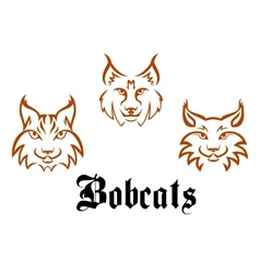 Bobcats and lynxs vector image vector image