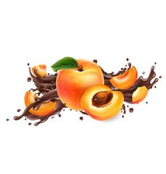 Composition ripe apricots and chocolate splash vector