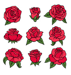 plants red roses symbols of love vector image