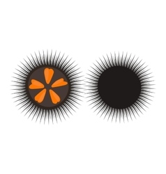 Black sea urchin vector image