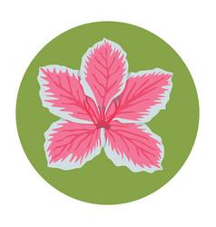 Flat-icon-floral-azalea vector