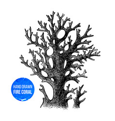 Hand sketched fire coral vector