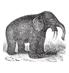 Hoe Tusker vintage engraving vector