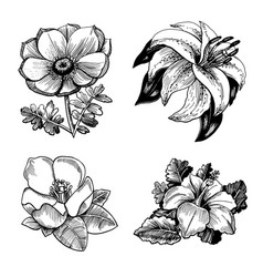 set of ketches of a flower with leaves vector image