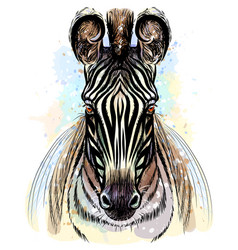 zebra sketchy color portrait zebra on a white vector image