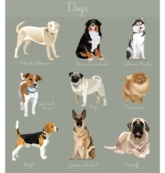 Different type of dogs set isolated Big and small vector image