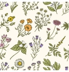 Wild flowers and herbs Seamless floral pattern vector image vector image