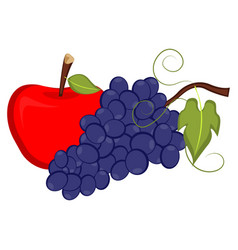 apple and grapes vector image