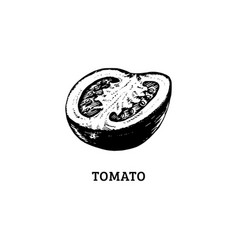 hand drawn sliced tomato in vector image