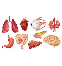 human internal organs flat icons big vector image