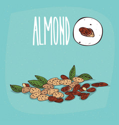 set of isolated plant almond nuts herb vector image