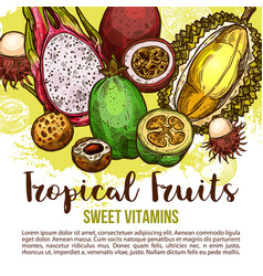 Tropical fruit poster of exotic asian berry sketch vector