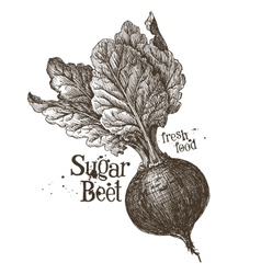 beet logo design template fresh vegetables vector image vector image