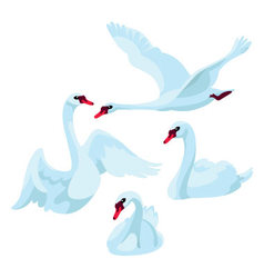Swans on white background vector