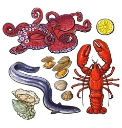 Octopus lobster eel mussel oyster seafood vector