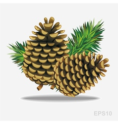 Pine cones with pine needles vector image