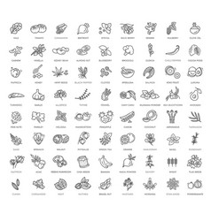 Superfoods line icons vector