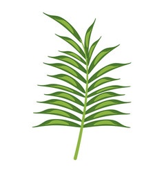 leave palm tropical flora vector image vector image