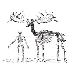 Extinct giant elk vintage vector