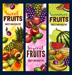 Fruit and berry banner of tropical or garden plant vector