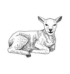 Hand drawn lamb vector