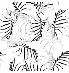palm leaves silhouette on white background vector image