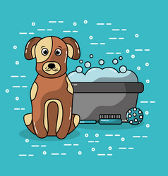 Pet dog sitting with bucket wash grooming brush vector