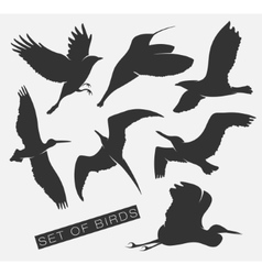Set of silhouettes of birds vector