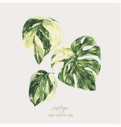 Watercolor tropical green leaves monstera vector