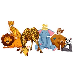 Different kind of wild animlas vector image