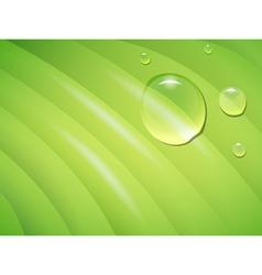 wet leaf vector image