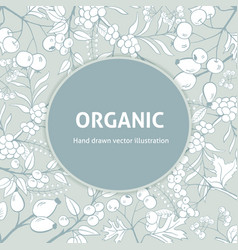 background with handdrawn herbs vector image