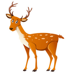 Cute deer standing on white background vector