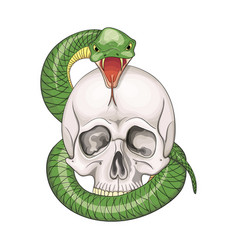 Hand drawn human skull entwined snake vector