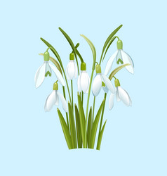 Snowdrops flowers on a blue background vector