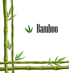 Bamboo frame vector image vector image