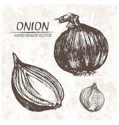 Digital detailed onion hand drawn vector