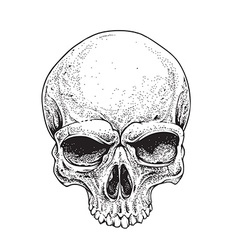 dotwork skull vector image