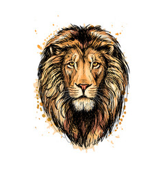 portrait a lion head from a splash of vector image