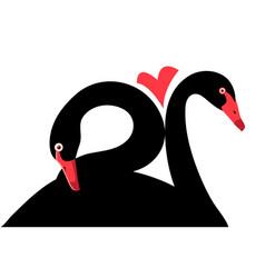 Portraits black swans in love vector