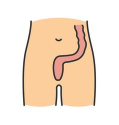 Rectum and anus color icon vector