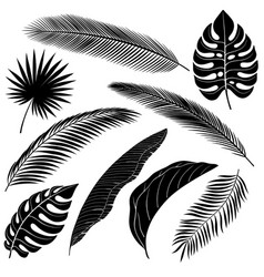set palm leafs vector image