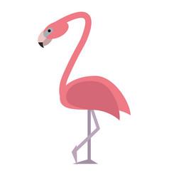 flamingo bird tropical icon vector image vector image