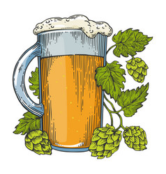 Beer and hops plant color sketch engraving vector