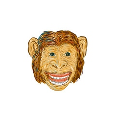 Chimpanzee Head Front Isolated vector