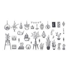 home plants in pots house plants cactus vector image