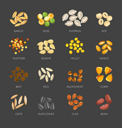 Seeds of natural plants in small heaps set vector